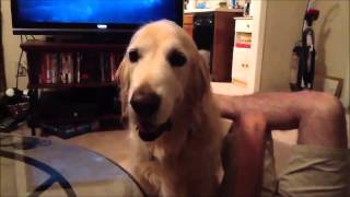 Repeat youtube video Funny Dogs, lustige Hunde zum Totlachen