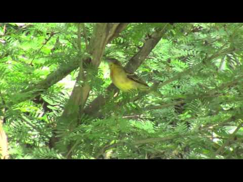 Gabon - Cocobeach