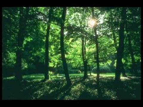 Biomes: Deciduous Forests - YouTube