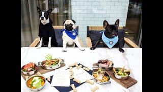 Dine with you dog: Manhattan restaurant offers new puppy-friendly menu