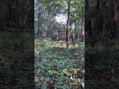 BIG BUCK Encounter! Mississippi Public Land