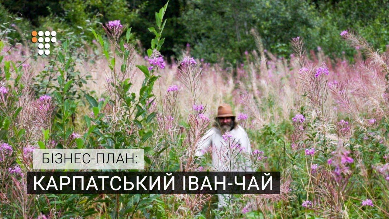 Чай МОЛЬФАР в програмі «Бізнес-план»