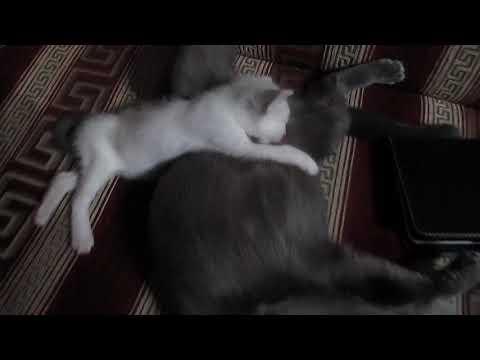 Котенок подкидыш и его приемная мама СПЯТ