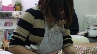 トライアルが決定した 保護猫れもんちゃん。 とーっても可愛い甘え声。 ...