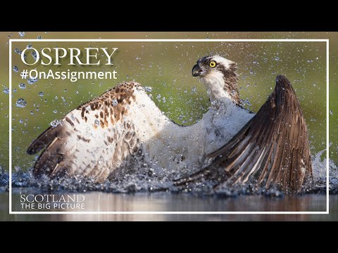 Osprey - On