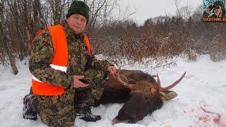 Охота на лосей в Ярославской области. Вышло 4 лося!