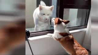 TRY NOT LAUGH, FUNNY DOGS VIDEO