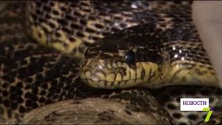 В Одесском регионе обитает четыре вида змей