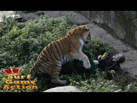 When Zoo Animals Attack