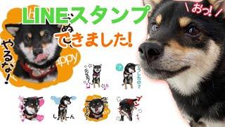極小豆柴・虎太郎のLINEスタンプができました!(柴犬) Shiba Inu dogs LINE stamp