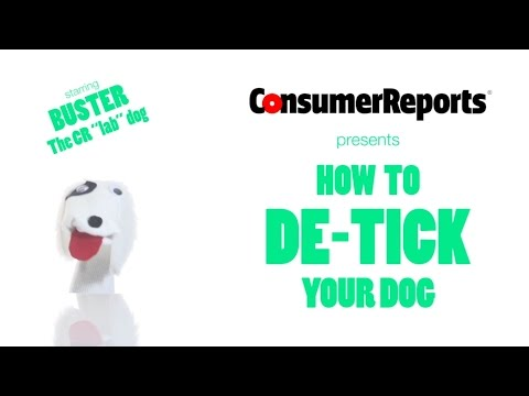 """How to Safely """"De-Tick"""" Your Dog  