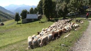 Le mouton 5 étoiles - Météo à la carte