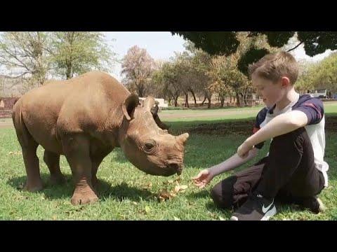 شاهد: طفل في الـ 11 من العمر يتكفل بمهمة حماية صغار حيوان وحيد القرن…  - نشر قبل 4 ساعة
