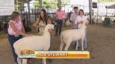 Miller's Border Collies at the Kentucky State Fair - YouTube
