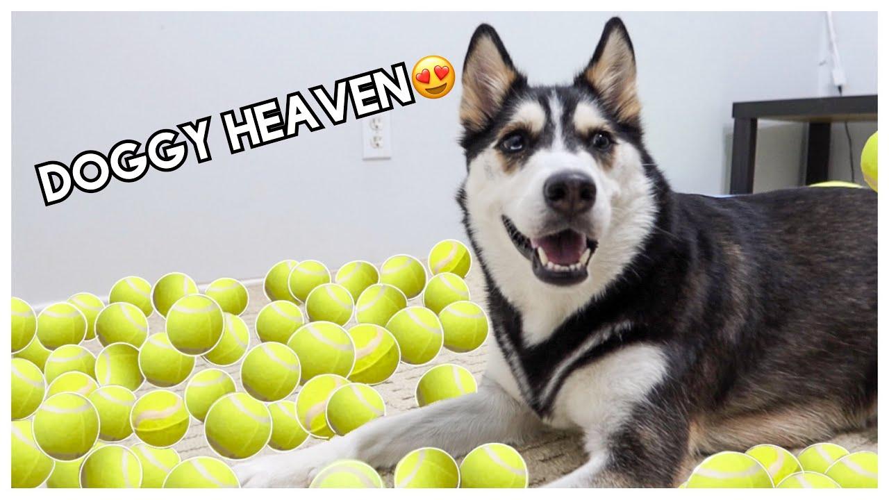 Surprising My DOG With 100 TENNIS BALLS!
