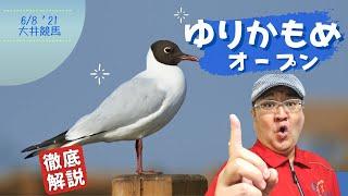 【田倉の予想】ゆりかもめオープン 徹底解説!