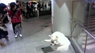 お目当ての女子(♀犬)に会えずご不満クローカ。帰宅拒否の休憩ちゅう。