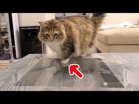 猫にサランラップドッキリ仕掛けてみた