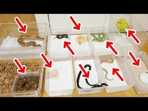 10匹のヘビに一気にエサやりした結果、最悪の事態に!?