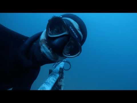 kingfish compilation -