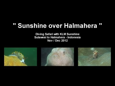 Sunshine over Halmahera / Diving Safari / 2012