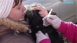 Выездная вакцинация животных от бешенства