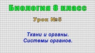 Биология 8 класс (Урок№5 - Ткани и органы. Системы органов.)