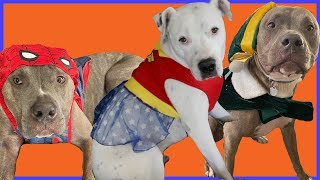 choose-my-dogs-halloween-costumes