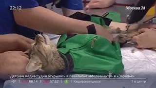 Владельцев обяжут регистрировать домашних животных.