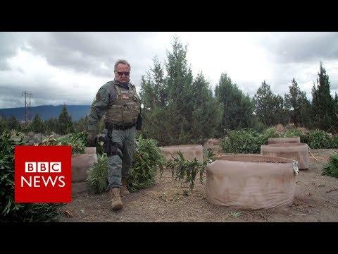 Weed wars: California county fights illegal marijuana - BBC News