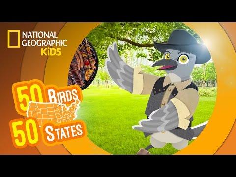 Texas - Feat. Rapper MC Tex the Mockingbird | 50 BIRDS, 50 STATES