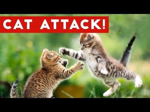Funniest Cat Attack Videos Compilation | Funny Pet Videos
