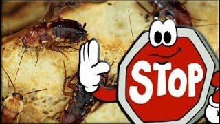Как избавиться от тараканов в домашних условиях НАВСЕГДА(, 2016-09-13T20:26:16.000Z)