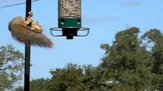 SloMo Squirrel Flung! Awesome!