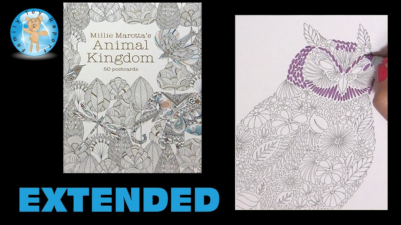 Millie Marottas Animal Kingdom 50 Postcards Adult Coloring Book Owl Extended