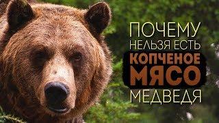 Почему нельзя есть копченое мясо медведя
