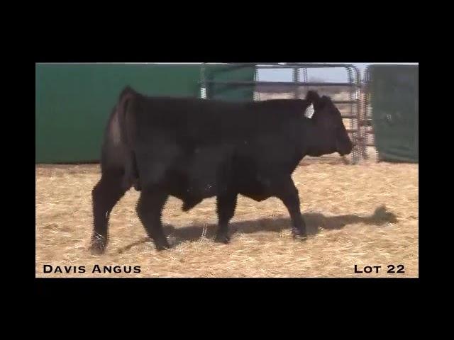 Davis Angus Lot 22
