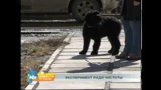 Новшество для владельцев собак в Иркутске(, 2016-03-24T05:26:38.000Z)
