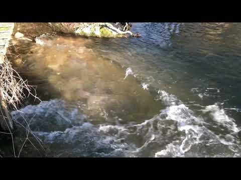 River Itchen Abbots Worthy Restoration Works February 2019