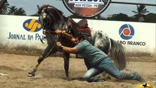 Oração de um cavalo de vaquejada