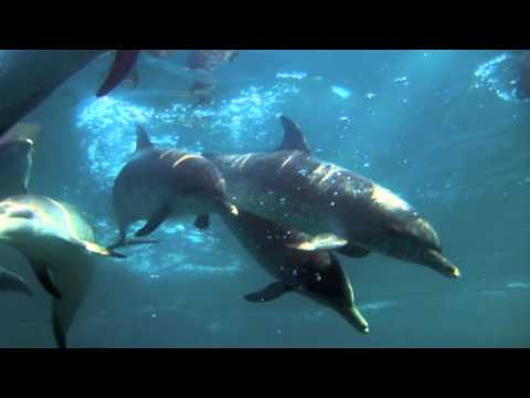 The Amazing Healing of Dolphins