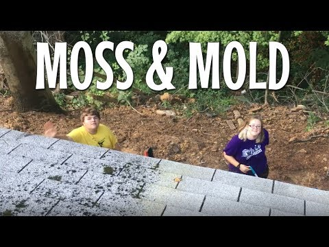 Cleaning Moss off a Shingled Roof - From 2500 sq ft to 950 sq ft - Family chooses minimal lifestyle