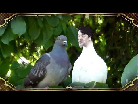 Beyaz Show - Alina Boz'un üstüne Pisleyen Kuş!