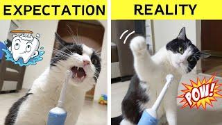 Cat vs Electric Toothbrush