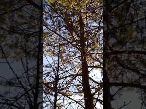 Собака как кошка на дереве - YouTube
