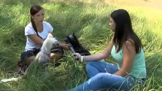Китайские хохлатые собаки видео. Chinese Crested Dog. Передача 4 лапы