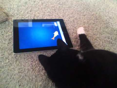 Bear the Cat discovers Ipad2 blooper 2/2