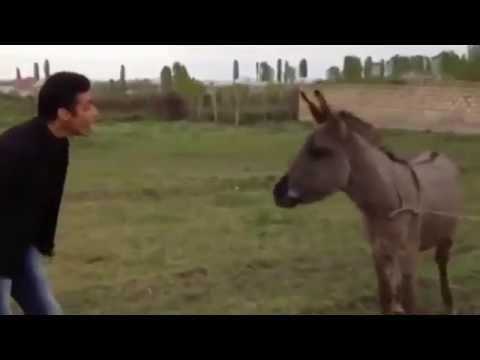 Узбек прикол . парень понимает язык ишака и попал в книга гиннеса