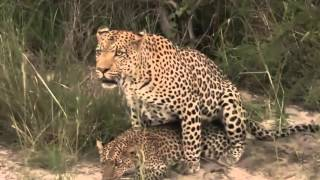 Repeat youtube video Animals Mating, Humping With Noise | Funny Animal mating