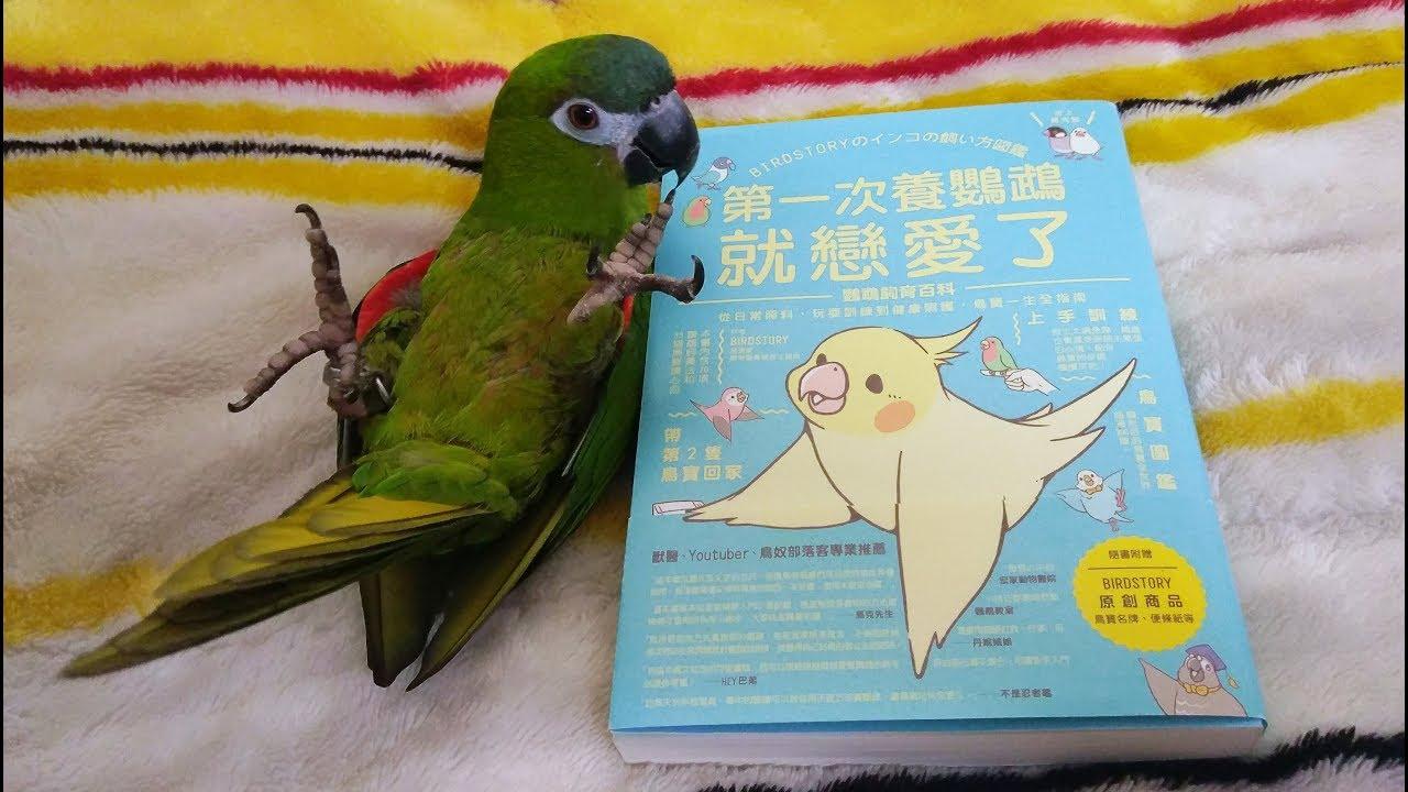 【精鵡瘋雲】【寵物日記】教你正確的鸚鵡飼養觀念!【第一次養鸚鵡就戀愛了】 - YouTube